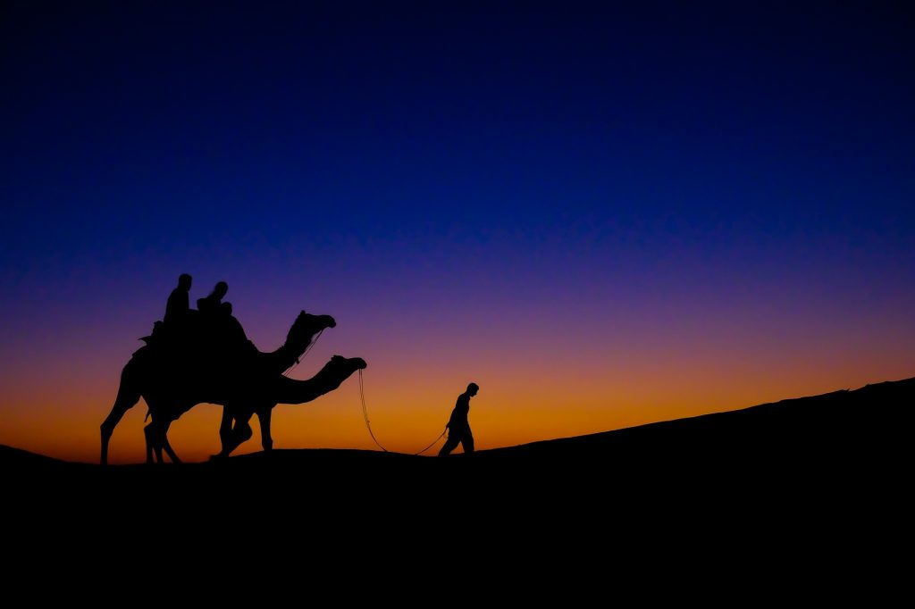 A camel herder returns to his base