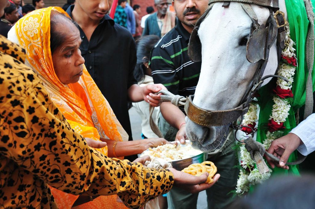 Beautifully decorated white horses are included in the procession. They serve to bring back the memory of the empty mount of Hazrat Imam Husain after his martyrdom. Such a horse in the procession is being fed by a Hindu woman.